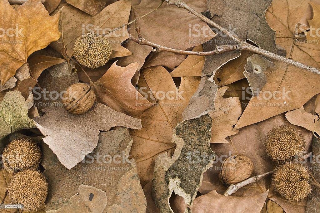 Autumn ground royalty-free stock photo