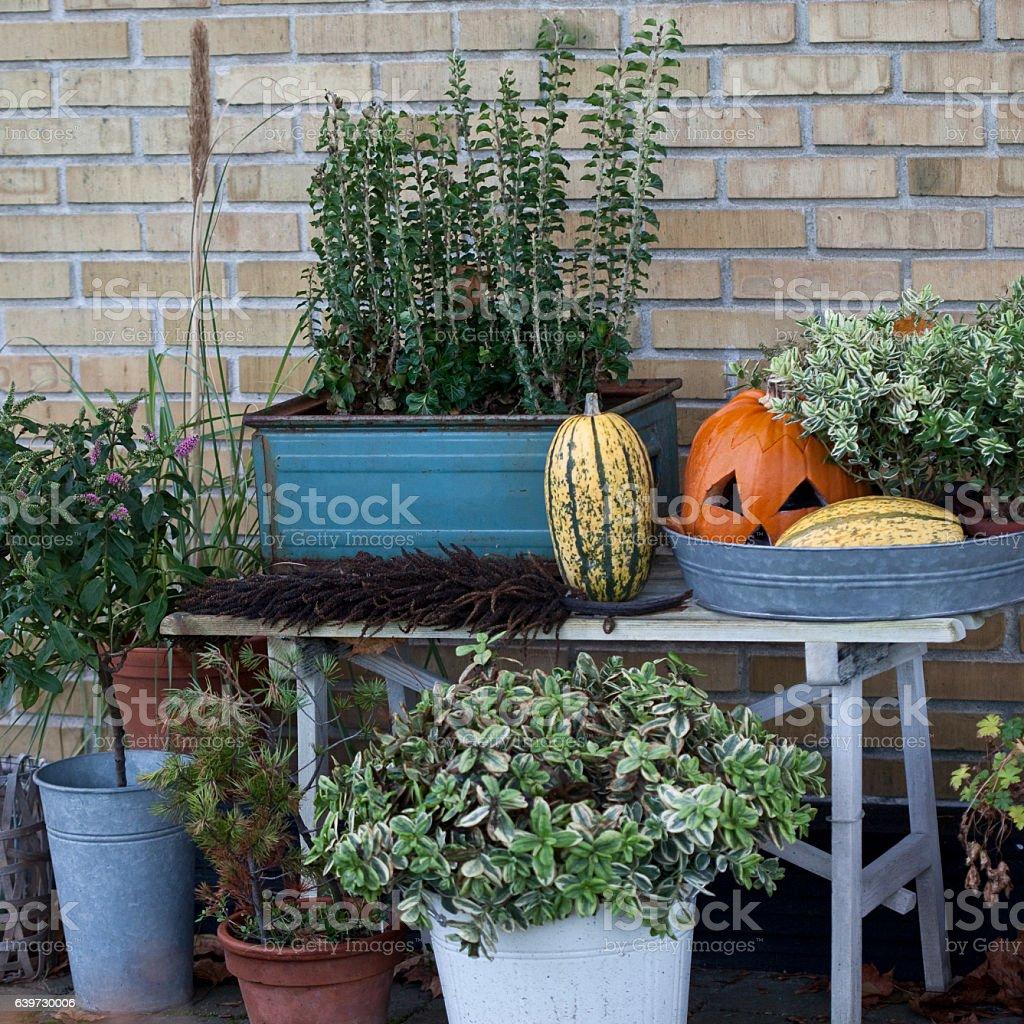 Autumn Halloween stock photo
