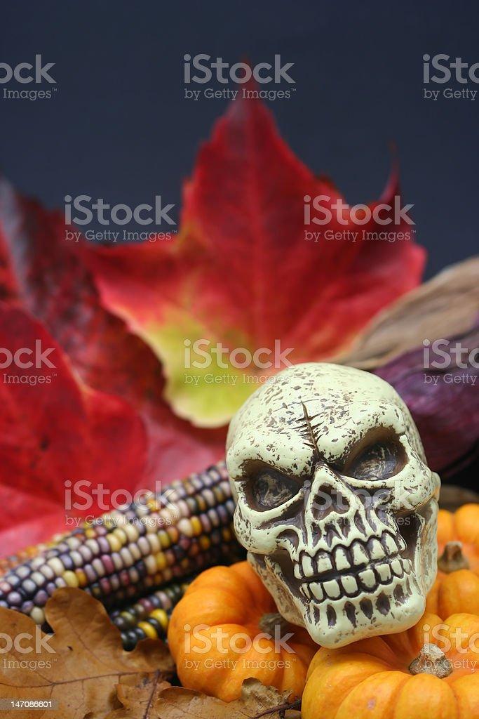Autumn Halloween Skull stock photo