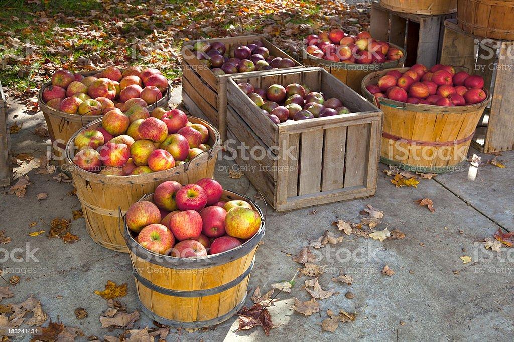 Autumn Harvest; Bushel Baskets of Fresh Apples royalty-free stock photo