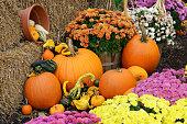 Autumn Harvest Decoration
