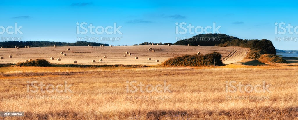 Autumn harvest fields with rapeseed and rolls of hay stock photo