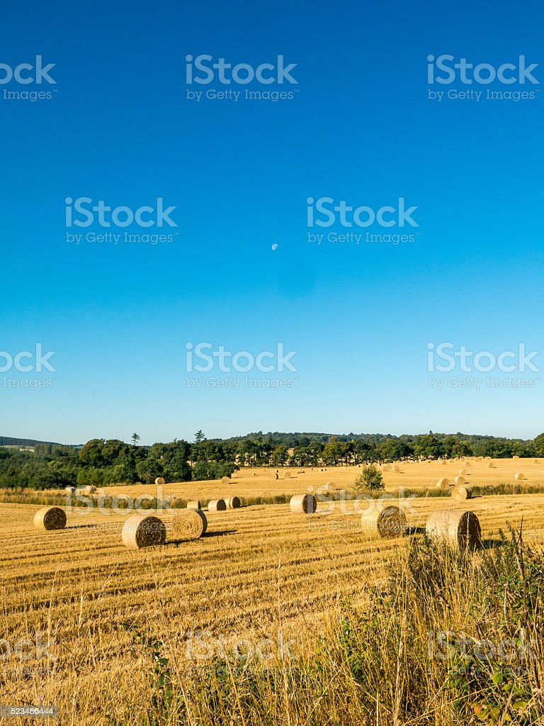 Autumn Harvest Hay stock photo