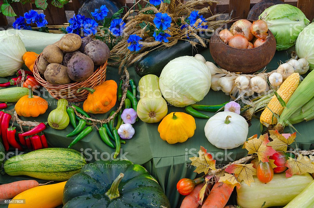 Autumn harvest of various vegetables stock photo