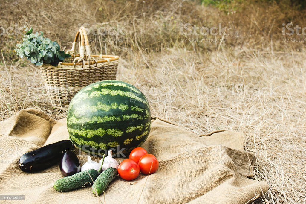 Autumn harvest of vegetables and fruits. Thanksgiving day. stock photo