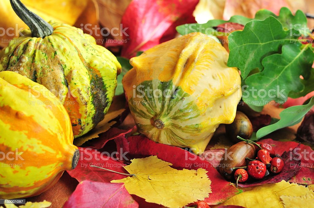 Autumn harvest, pumpkins with multicolored leaves in background stock photo