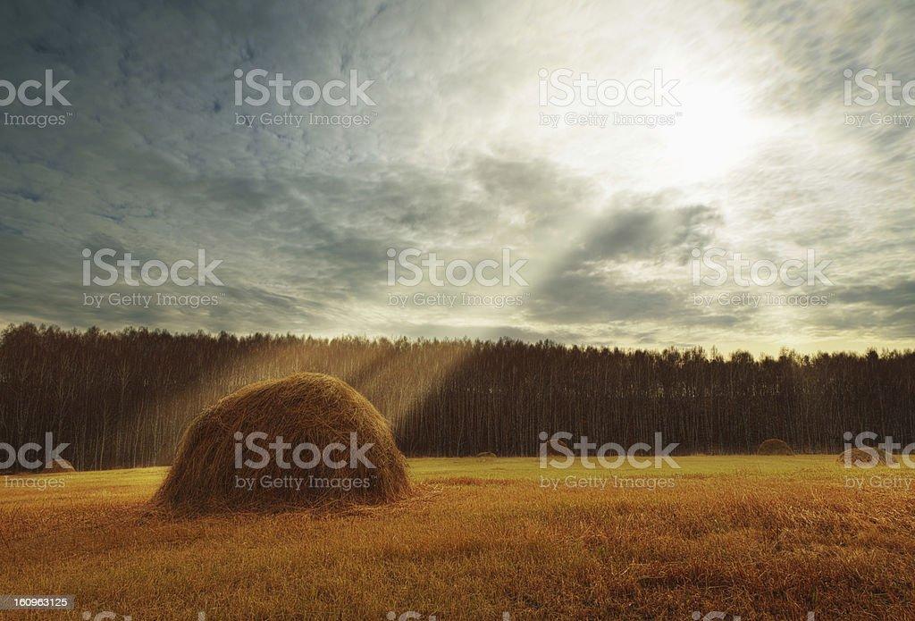 Autumn, haymaking stock photo