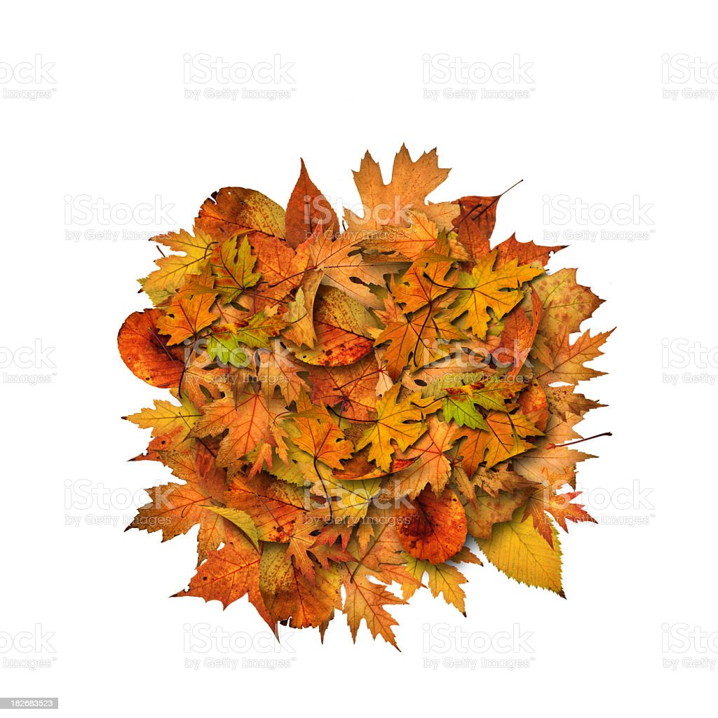 Autumn heap royalty-free stock photo
