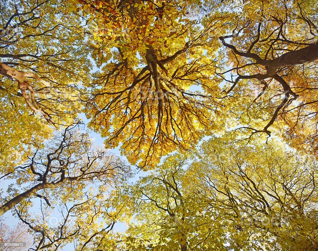 Autumn Heath stock photo