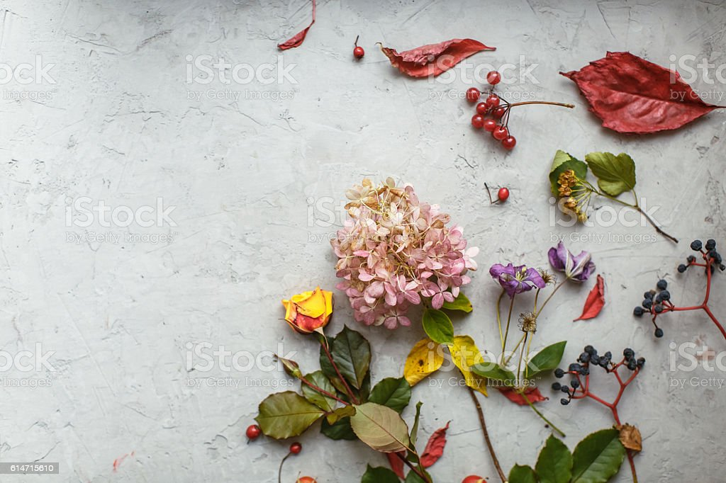 Autumn herbarium: dried flowers, berries and leaves stock photo