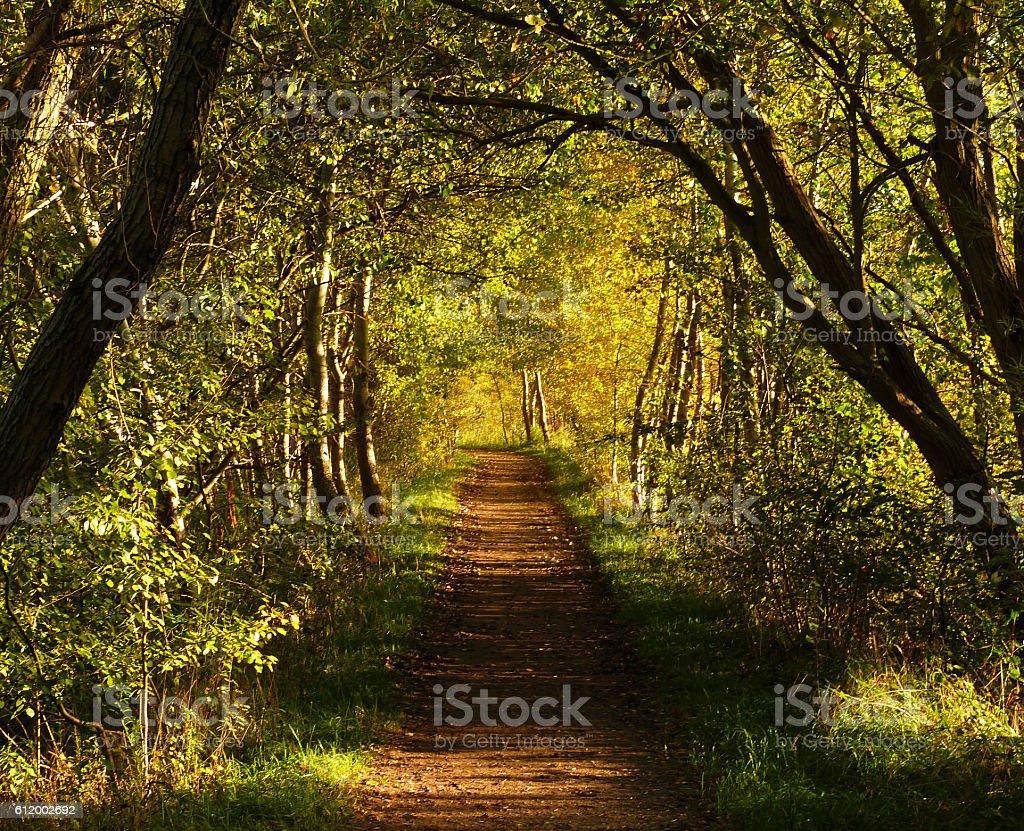 Autumn - Herbst stock photo