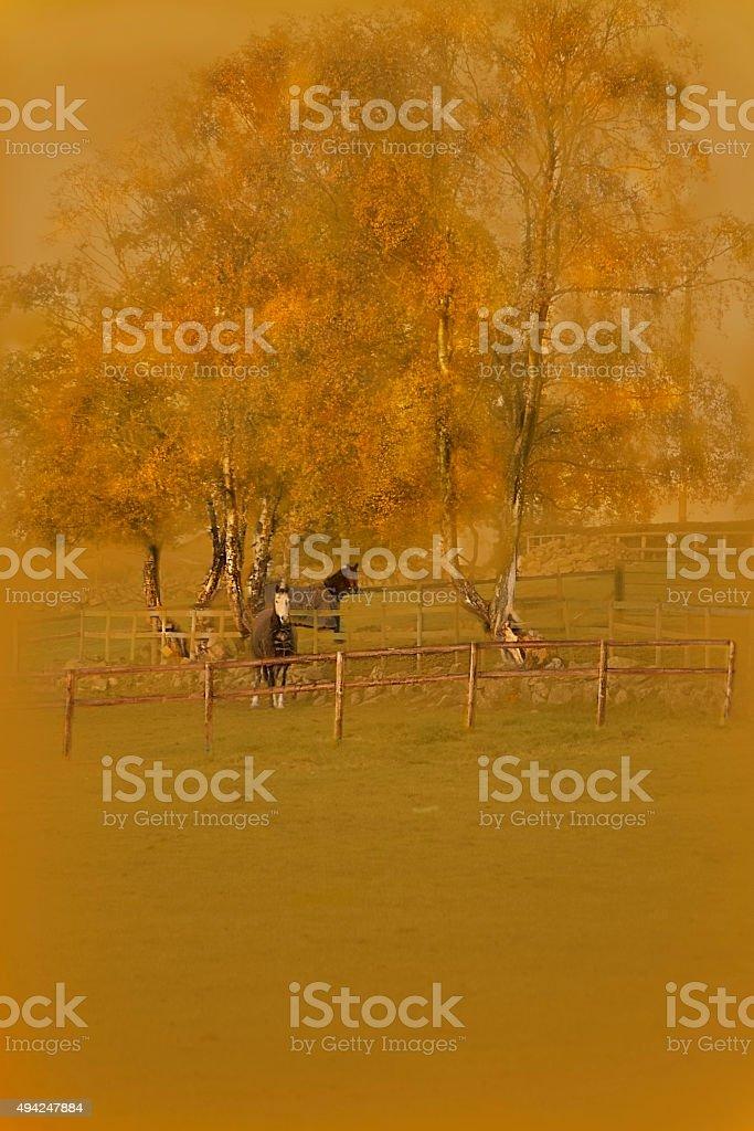 Autumn horses stock photo