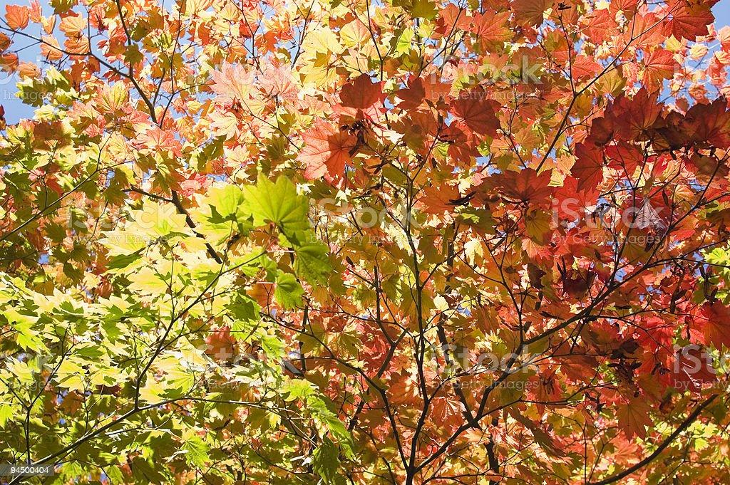 Autumn hues. royalty-free stock photo