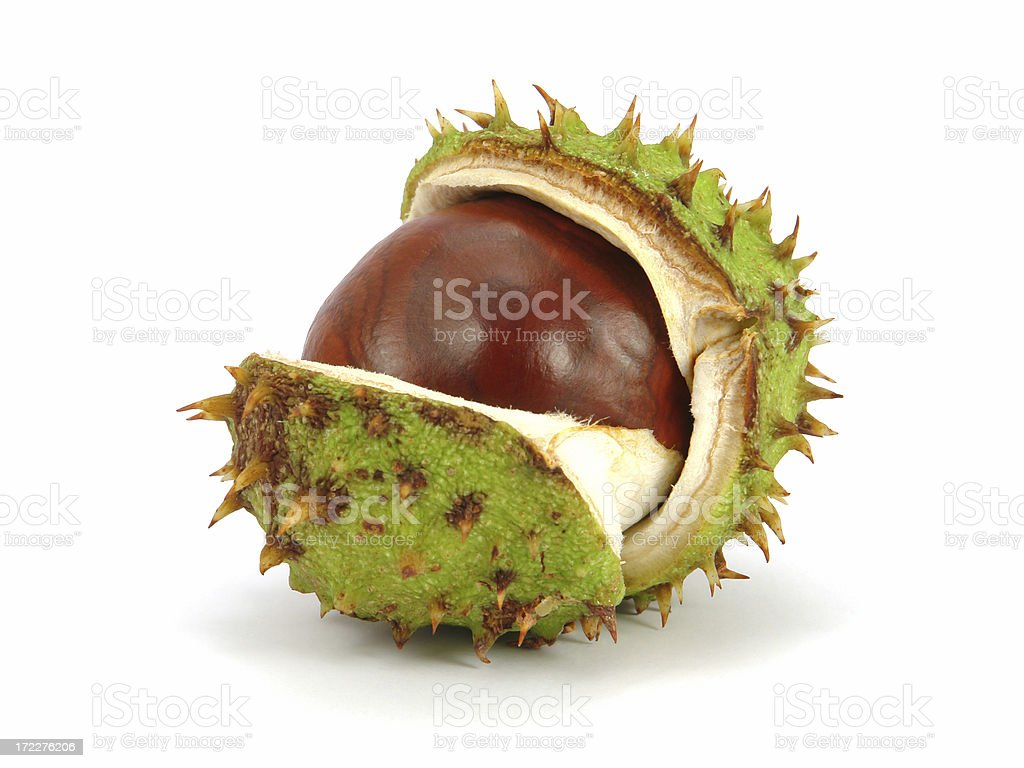 Autumn husk stock photo