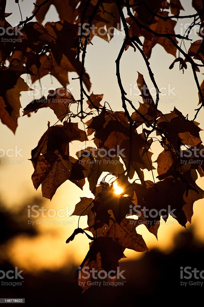 Autumn impression royalty-free stock photo