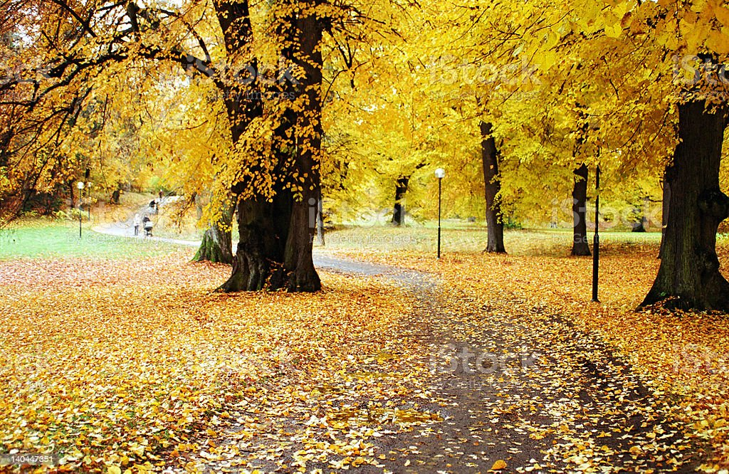 Autumn in a park royalty-free stock photo