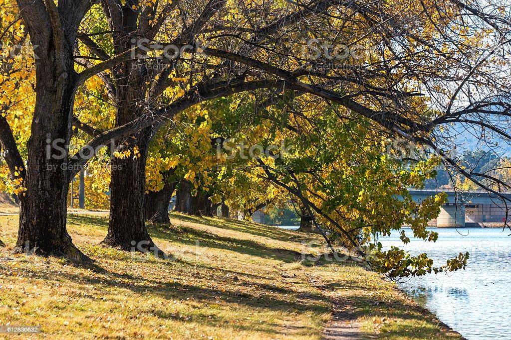 Autumn in Barton Park, Canberra stock photo