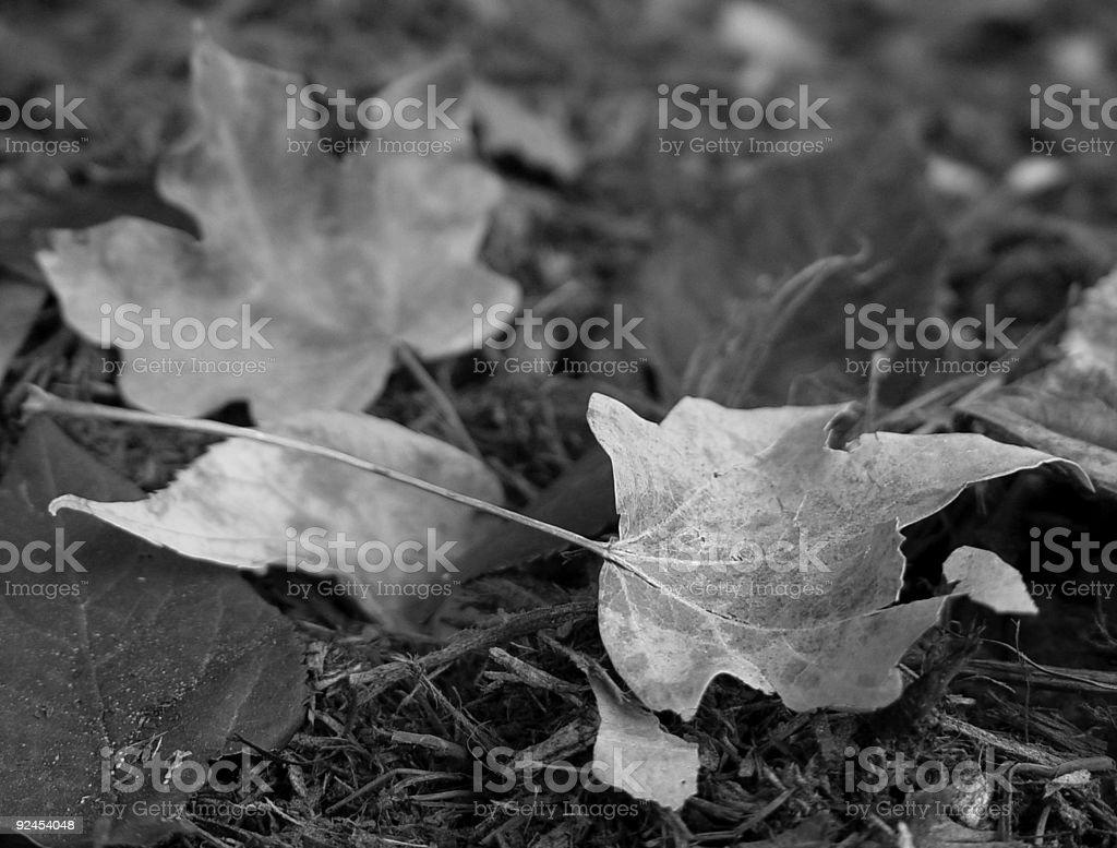 Autumn in bloom stock photo