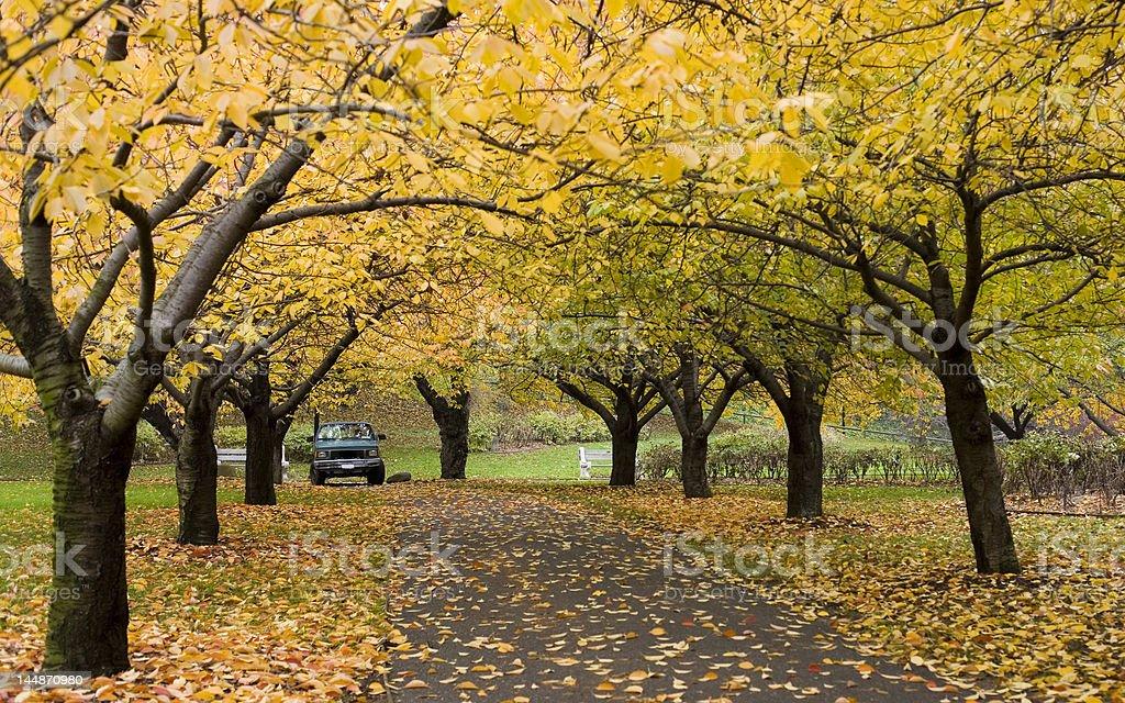 Autumn in botanic garden royalty-free stock photo