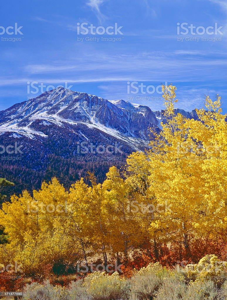 Autumn in California (P) stock photo