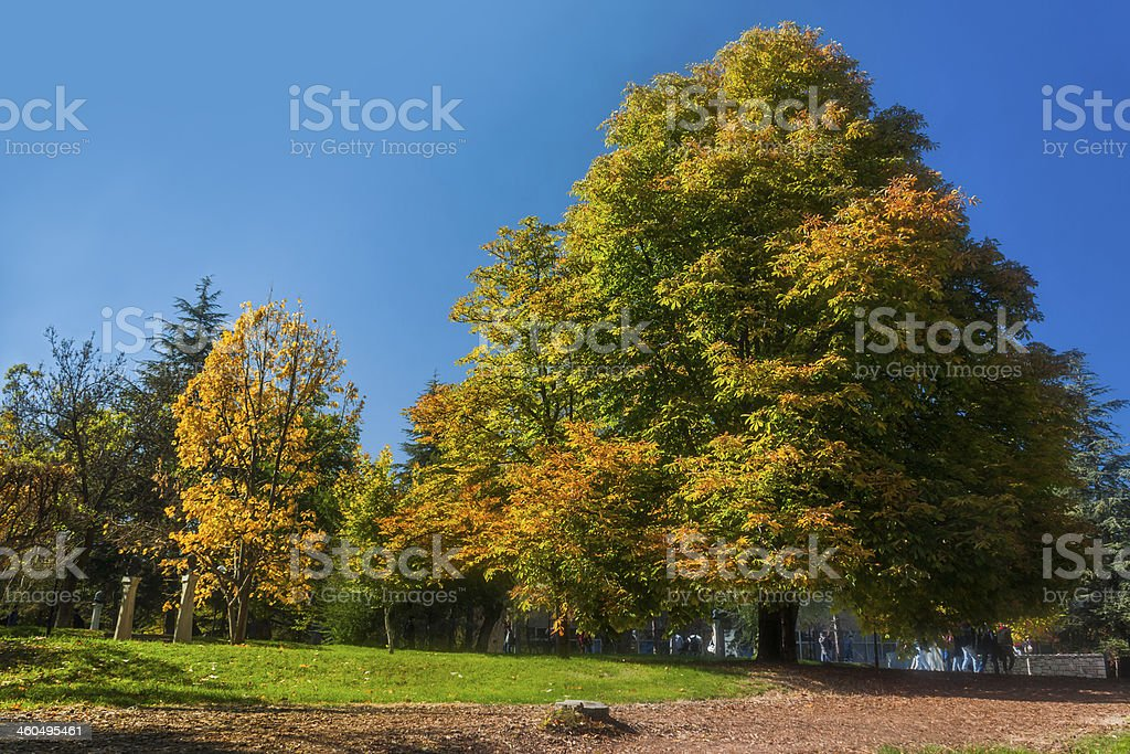 Autumn in Campus royalty-free stock photo