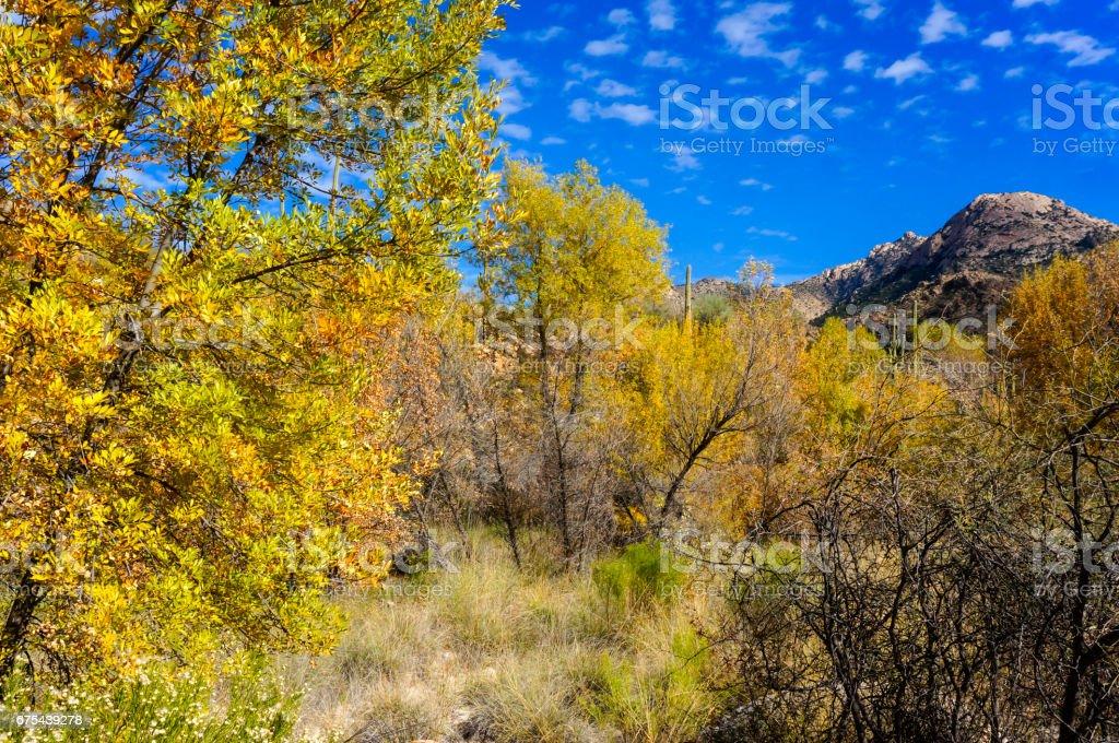 Autumn In Canyon stock photo