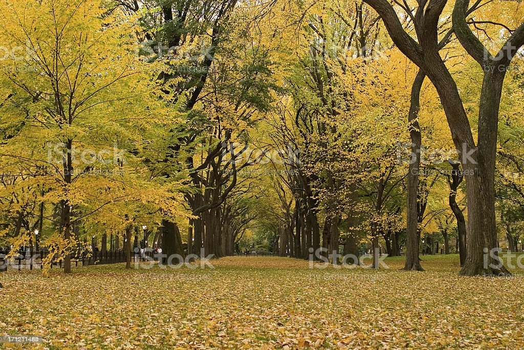 Autumn in Central Park stock photo