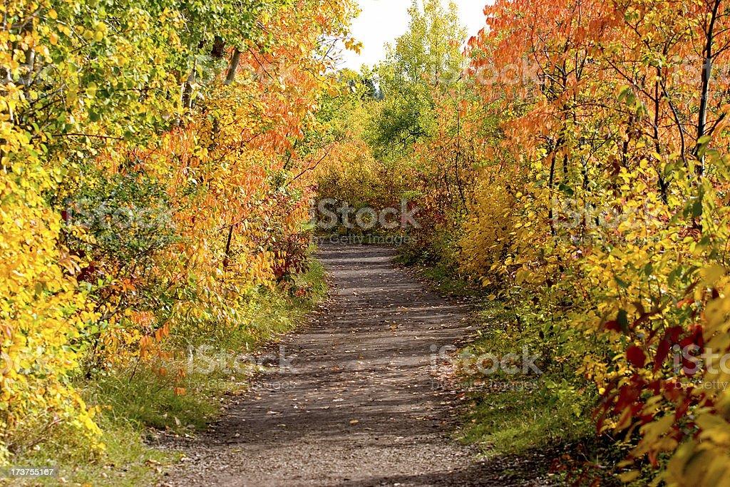 Autumn In Edmonton royalty-free stock photo