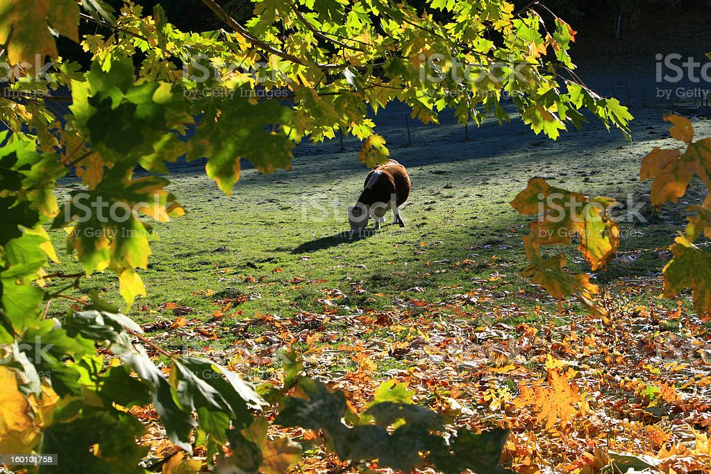 Autumn in Farm Country royalty-free stock photo