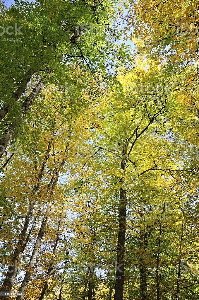 Autumn in forest royalty-free stock photo