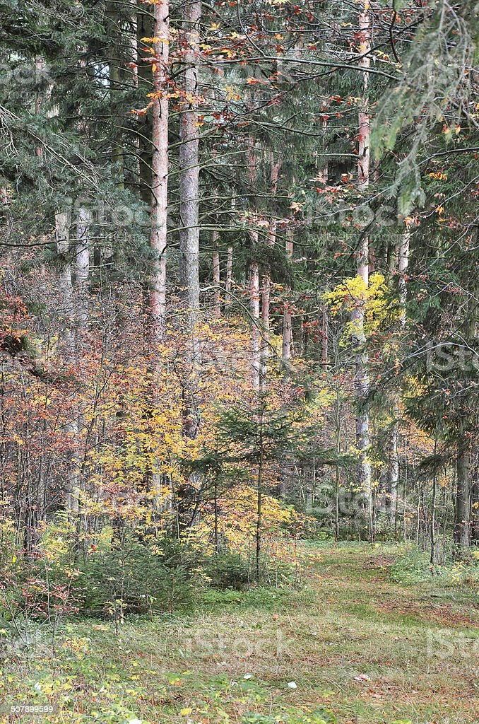 Floresta de outono foto de stock royalty-free
