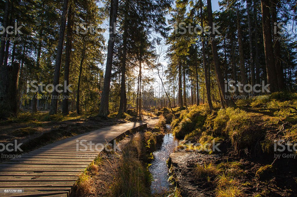 Autumn in german Mountains and Forests stock photo