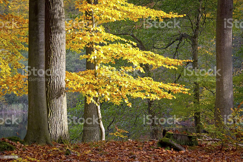 Autumn in Grumsin, Brandenburg. stock photo