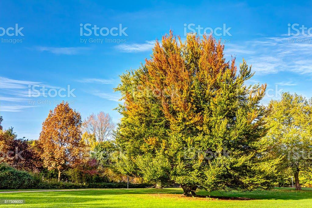 Autumn in Hamburg stock photo