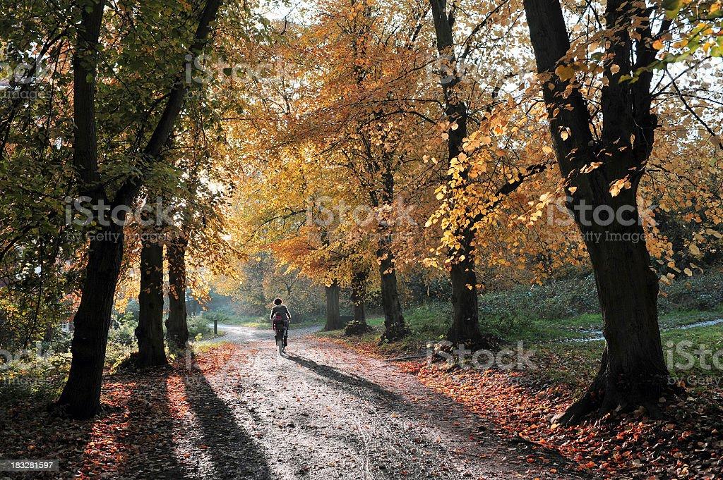 Autumn in Hampstead stock photo