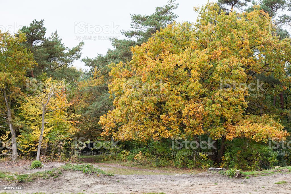 autumn in Holland stock photo
