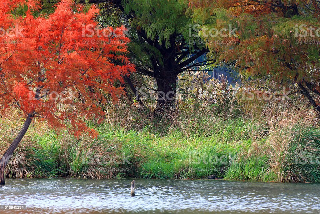 Autumn in Illinois 2016 #9 stock photo
