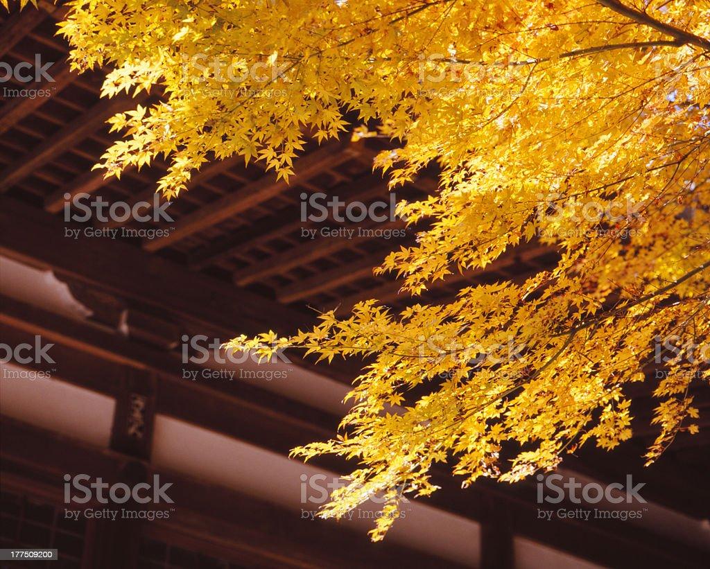 Autumn in Kamakura stock photo