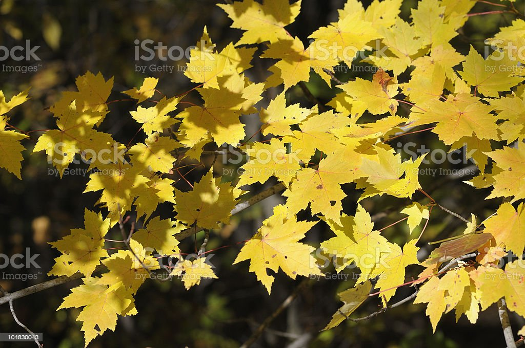 Autumn in Michigan stock photo