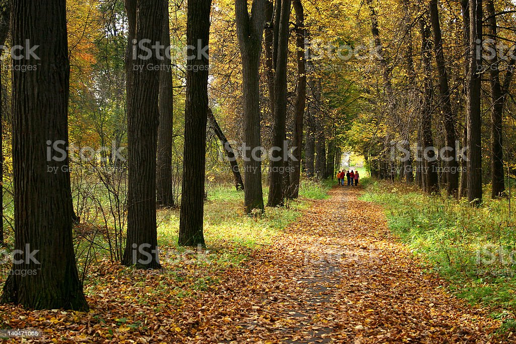 Autumn in our park. royalty-free stock photo