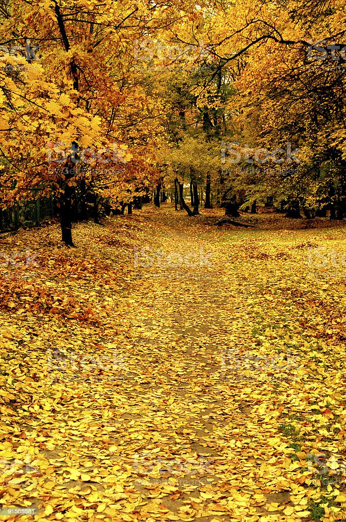 Autumn in park royalty-free stock photo