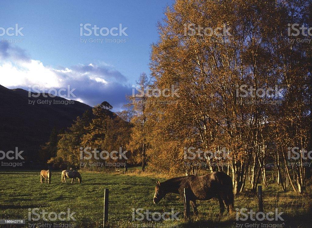 Autumn in Perthshire Scotland stock photo