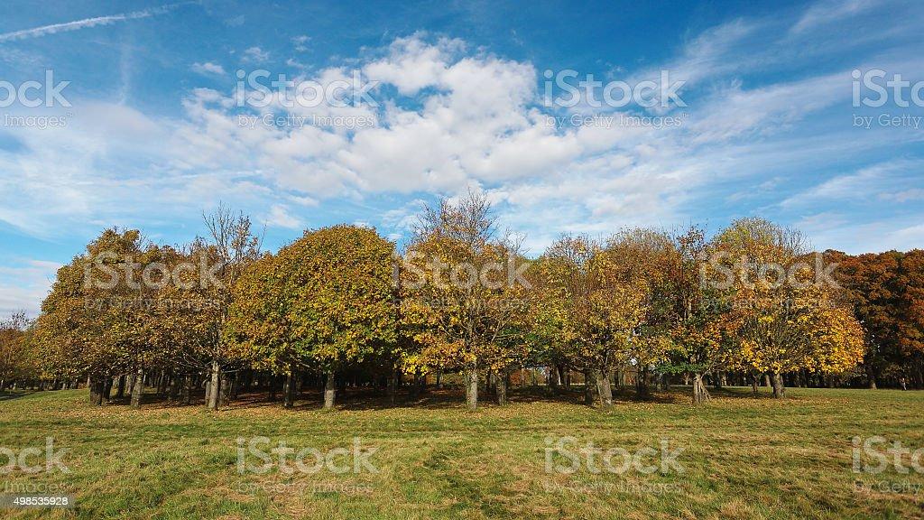 Autumn in Phoenix Park royalty-free stock photo