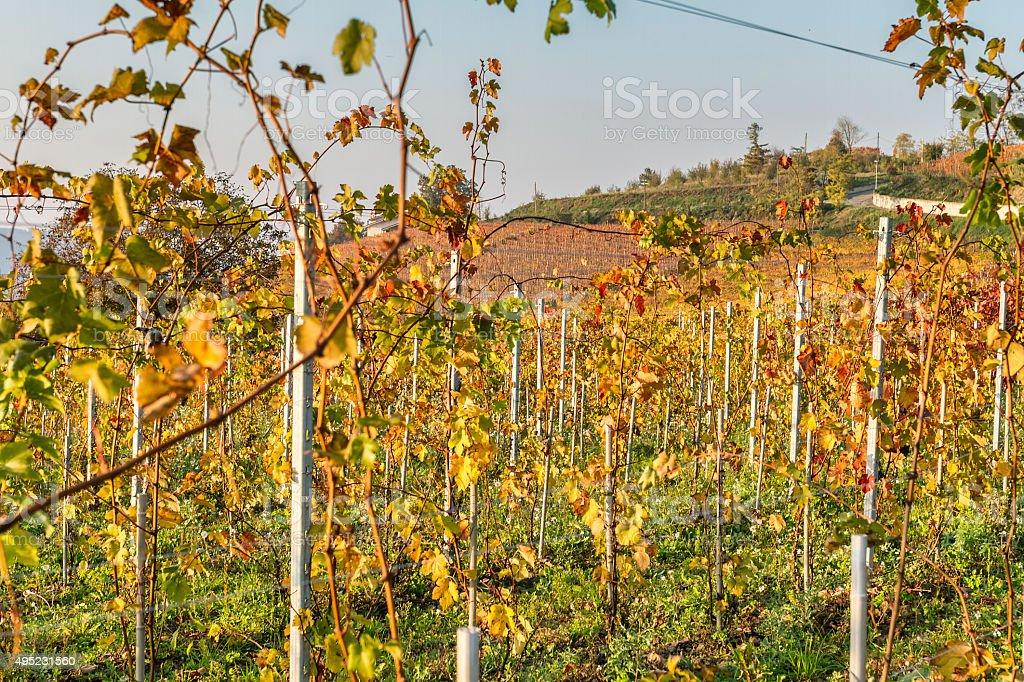 Autumn in Piedmont (Alba - Langhe) stock photo