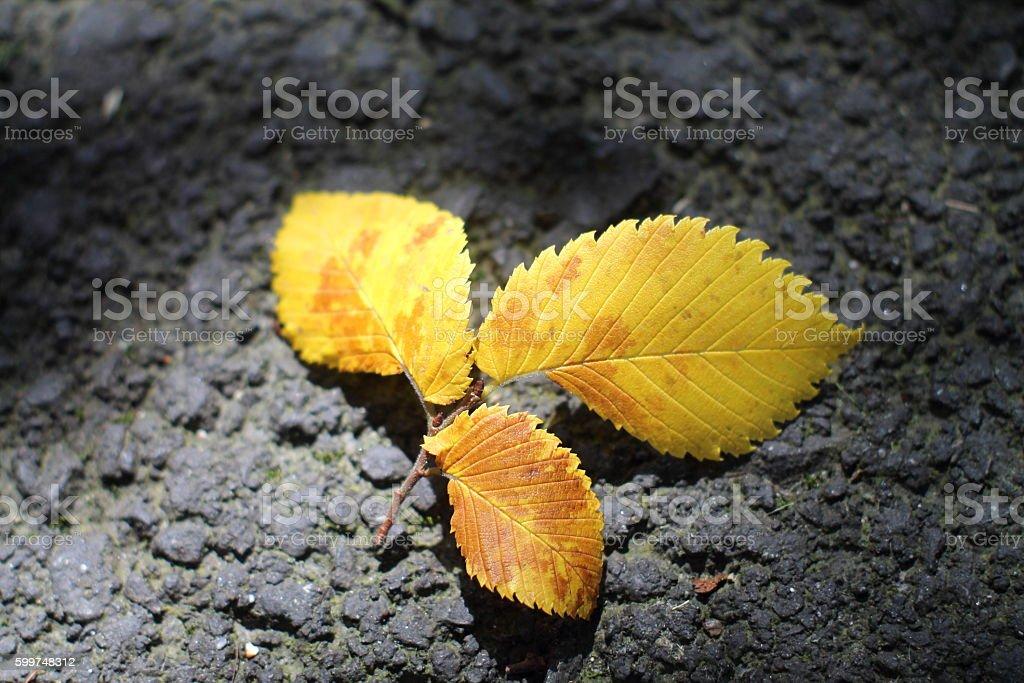Autumn in spa town. stock photo
