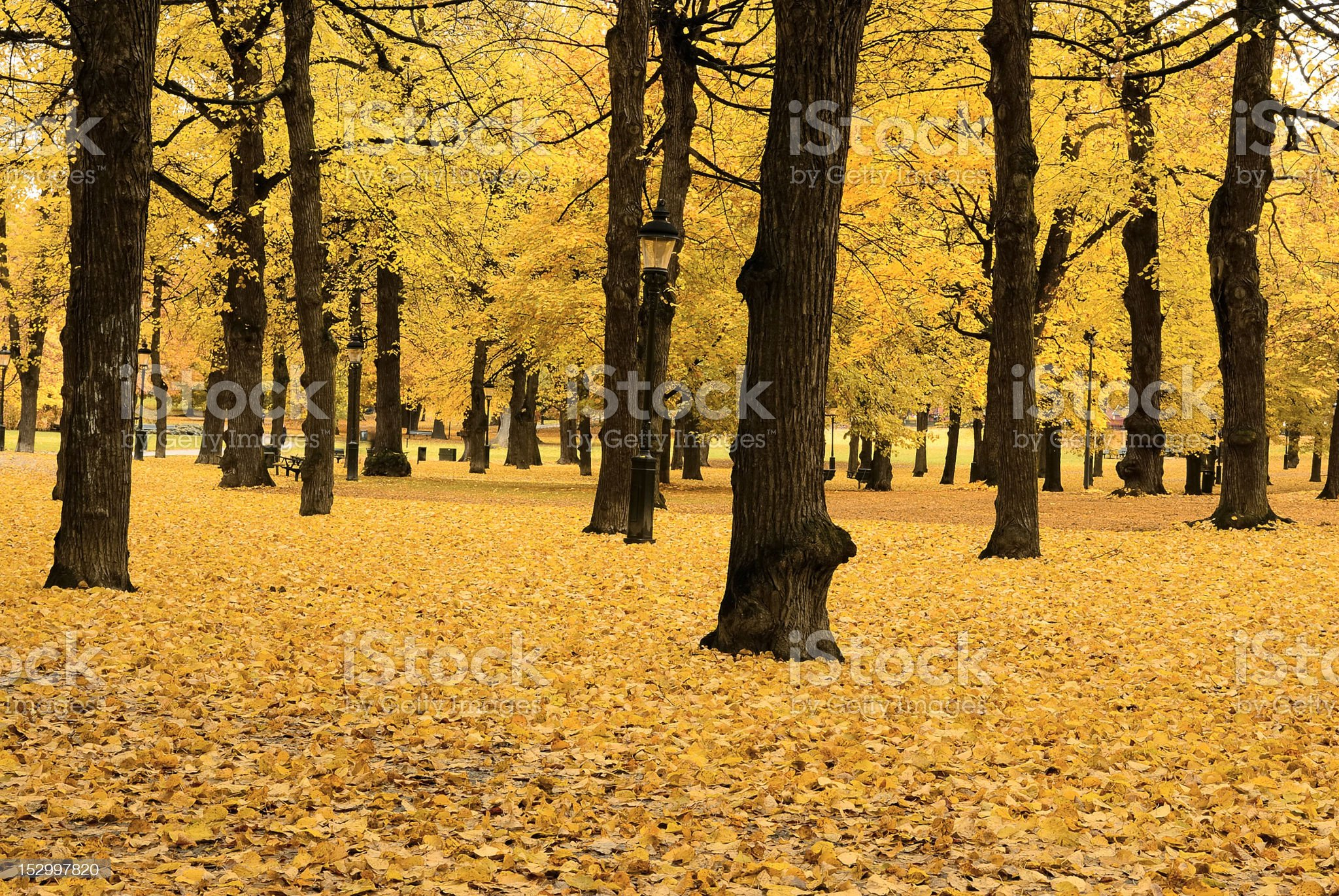 Autumn in Stockholm royalty-free stock photo