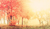 autumn in sunny forest, natural background with vintage effect