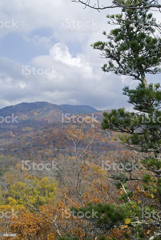 Autumn in Taiga stock photo