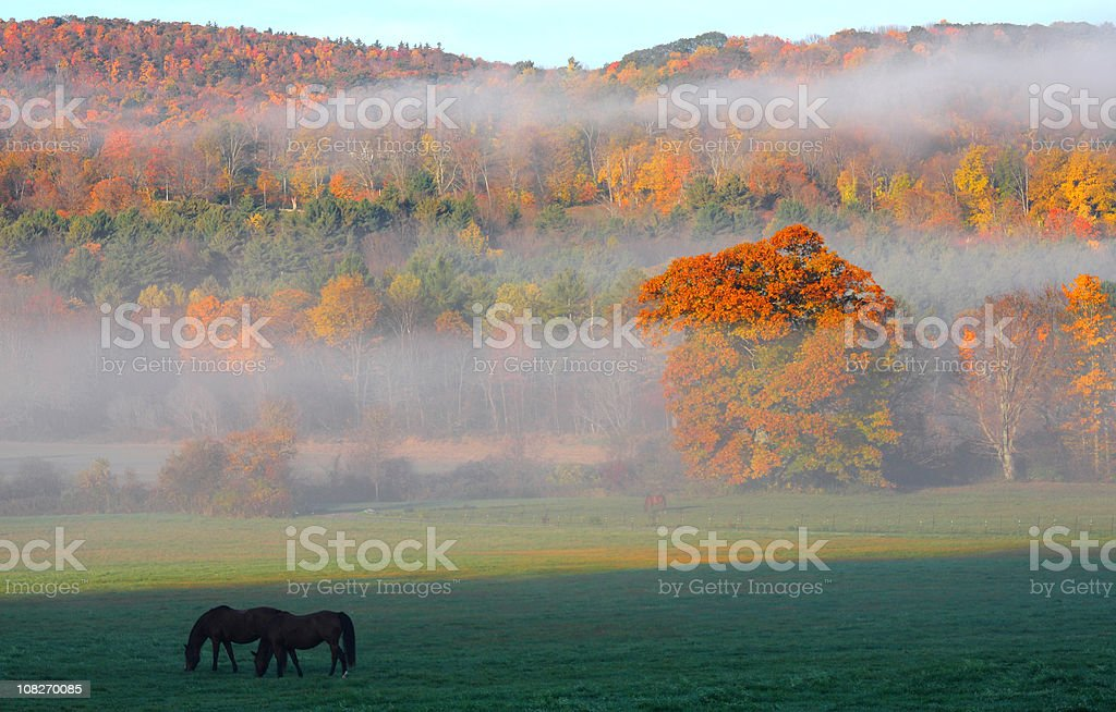 Autumn in the Berhires stock photo