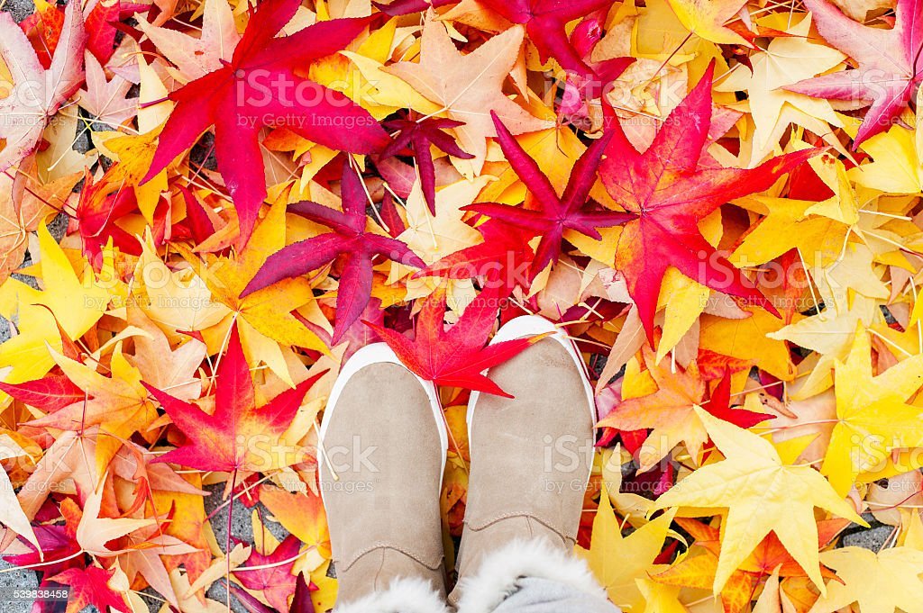 Autumn in the city. Manymulticolored maple fall leaves stock photo